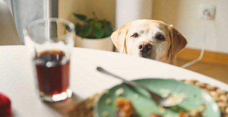 What If Your Dog Eats Something Poisonous?